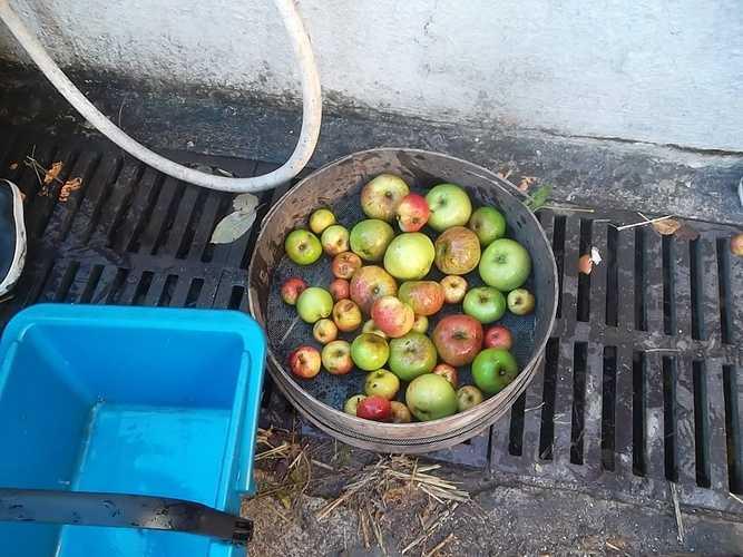 Découverte de la pomme à la ferme de la Ville Oger sam3507-1024x768